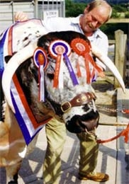 Tetford Clansman (1995-2007) pictured after winning Male Champion at the Royal Show in 1999.